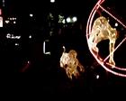 12月上野の西郷さんの銅像の前の広場